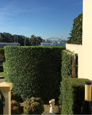Garden Clean Ups Drummoyne, Strata Cleaning Five Dock, Strata Maintenance Concord, Rubbish Removal Strathfield, Lawn Mowing Balmain